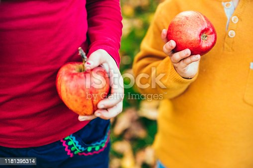 865889676 istock photo Kids in an orchard holding red apples 1181395314