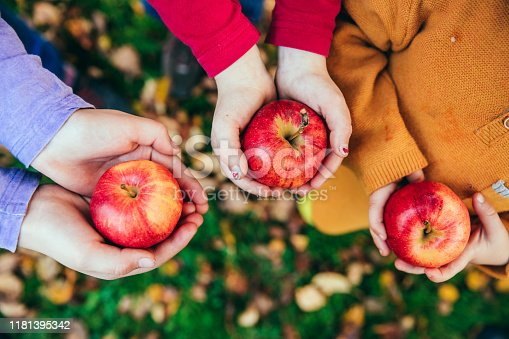 865889676 istock photo Kids in an orchard holding red apples 1181395342