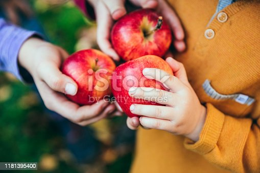 865889676 istock photo Kids in an orchard holding red apples 1181395400