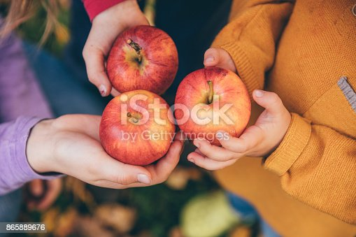 865889676 istock photo kids in an orchard holding red apples 865889676