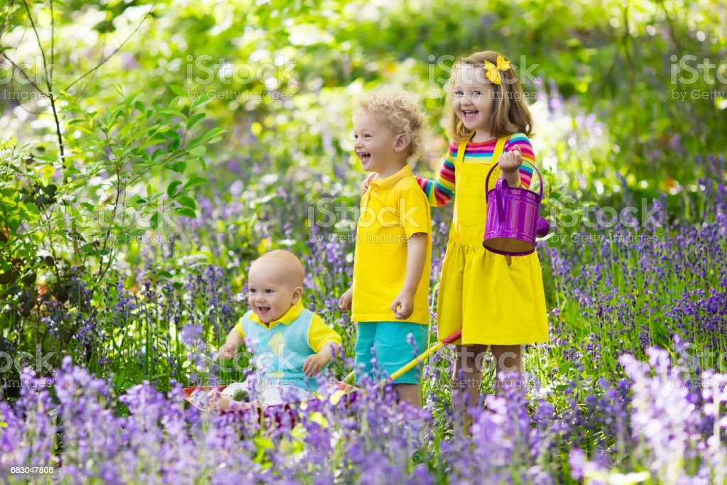 Kids in bluebell flower forest in summer zbiór zdjęć royalty-free
