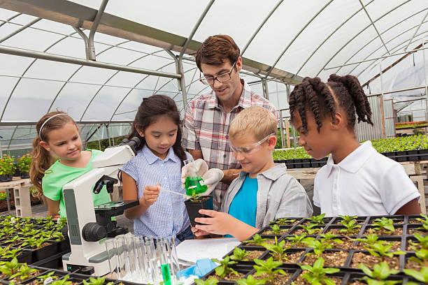 crianças aprendizagem sobre botânica as mãos - teacher school solo imagens e fotografias de stock