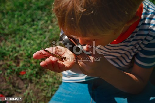 kids learning nature- child exploring dragonfly with magnifying glass