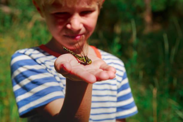 Kinder lernen Insekten - kleiner Junge Holding Libelle – Foto