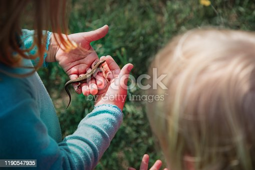 525737167 istock photo kids learning nature - kids holding and exploring lizard 1190547935