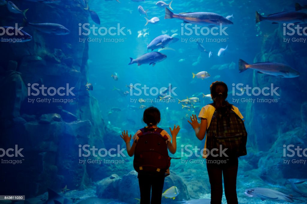 Kids looking at fish in a big aquarium – zdjęcie