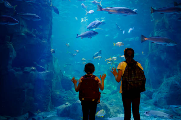 Kids looking at fish in a big aquarium Kids looking at fish in a big aquarium aquarium stock pictures, royalty-free photos & images