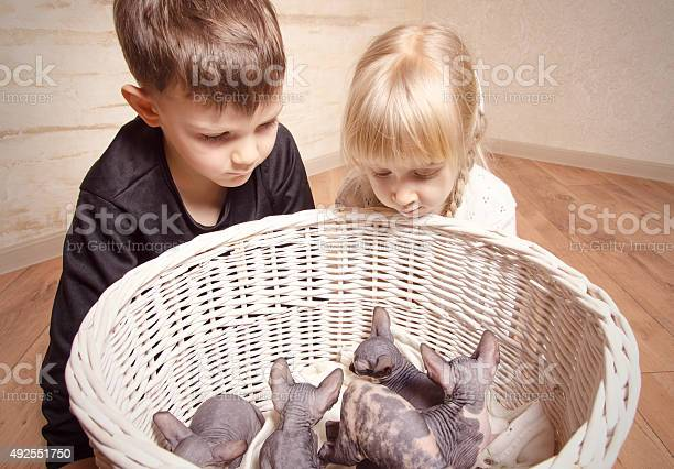 Kids looking at the sphynx basket in a basket picture id492551750?b=1&k=6&m=492551750&s=612x612&h=usoqiakmpww64tol4z4sgrbcdqv7hb6 nkh 56orarq=