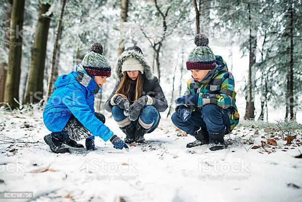 Photo of Kids observing animal tracks on snow in winter forest