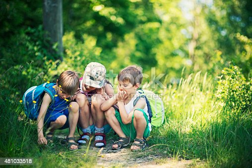istock Kids observing bugs in forest 481033518