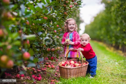 istock Kids picking fresh apples from tree 490303758