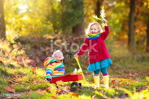 Kids play in autumn park. Child picking yellow maple leaves in sunny forest. Little girl with wheelbarrow walking in the woods. Fall weather activity. Children playing in rain. Kid with golden leaf.