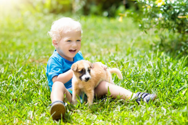 kids play with puppy. children and dog in garden. - bambino cane foto e immagini stock