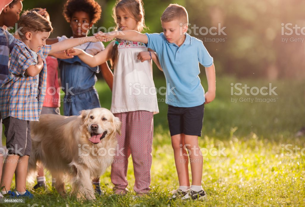 Kids playing games with golden retriever in the park. royalty-free stock photo