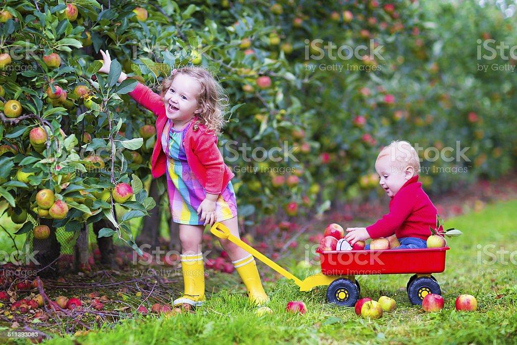 Bambini che giocano in un giardino apple - foto stock