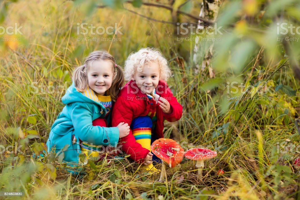 Kids playing in autumn forest stock photo