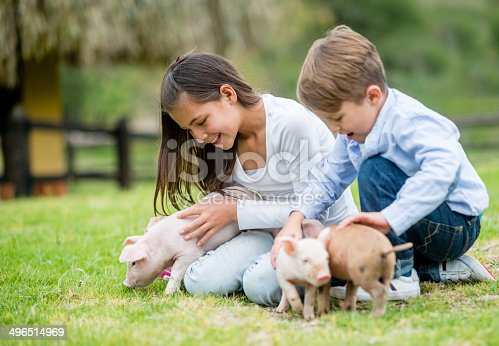 Kids playing with piglets at an animal farm