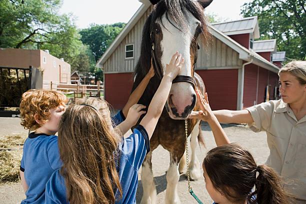 kinder streicheln horse - vorschulzoothema stock-fotos und bilder