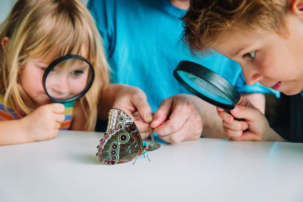Kinder studieren Batterfloe-Fütterungsprozess, die Rearch-Projekt für die Schule – Foto