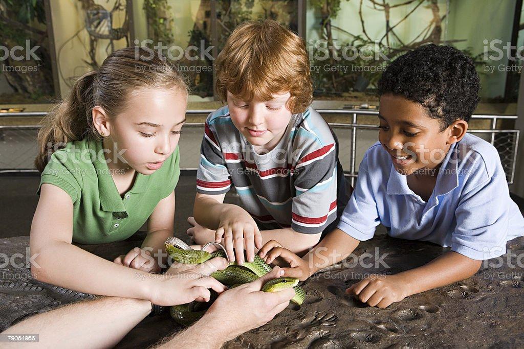 Kids touching snake royalty-free stock photo