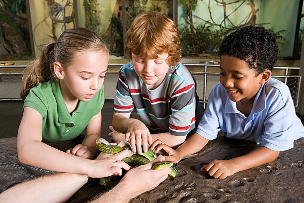 Kids touching snake  field trip stock pictures, royalty-free photos & images