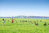 Kids walking through gooses at the Liberty State Park during summer day