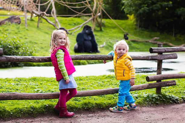 Kids watching animals at in safari park picture id590266256?b=1&k=6&m=590266256&s=612x612&w=0&h=wkd8e9qmznfzysfvvq njjybpnionr8ty6c4vic3lk0=