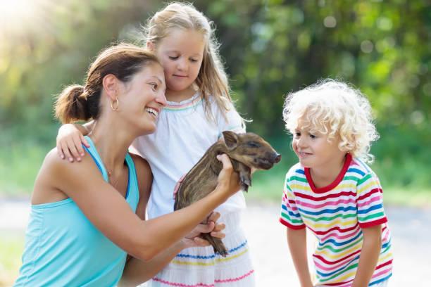 kinder mit baby schwein tier. kinder am bauernhof oder zoo - vorschulzoothema stock-fotos und bilder