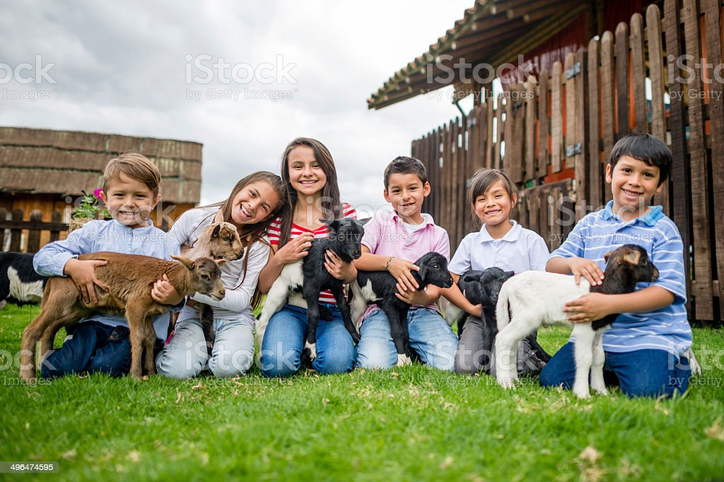 Kids with goats stock photo