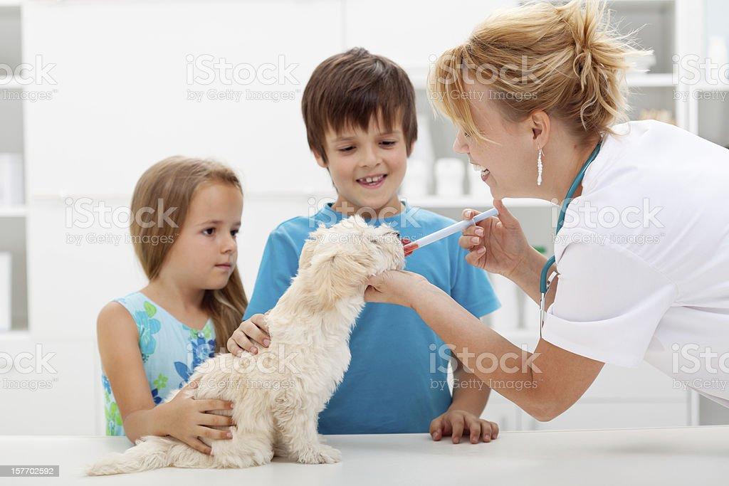 Kinder mit Ihrem Haustier an der Tierarzt Doktor – Foto