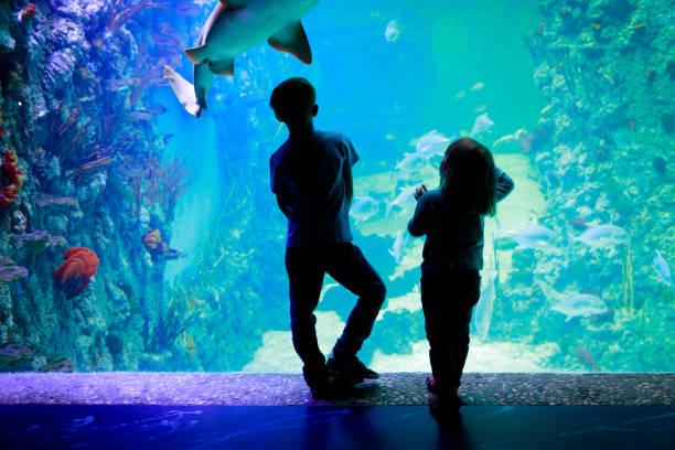 kids-boy and girl- watching fishes in aquarium - zoo struttura con animali in cattività foto e immagini stock
