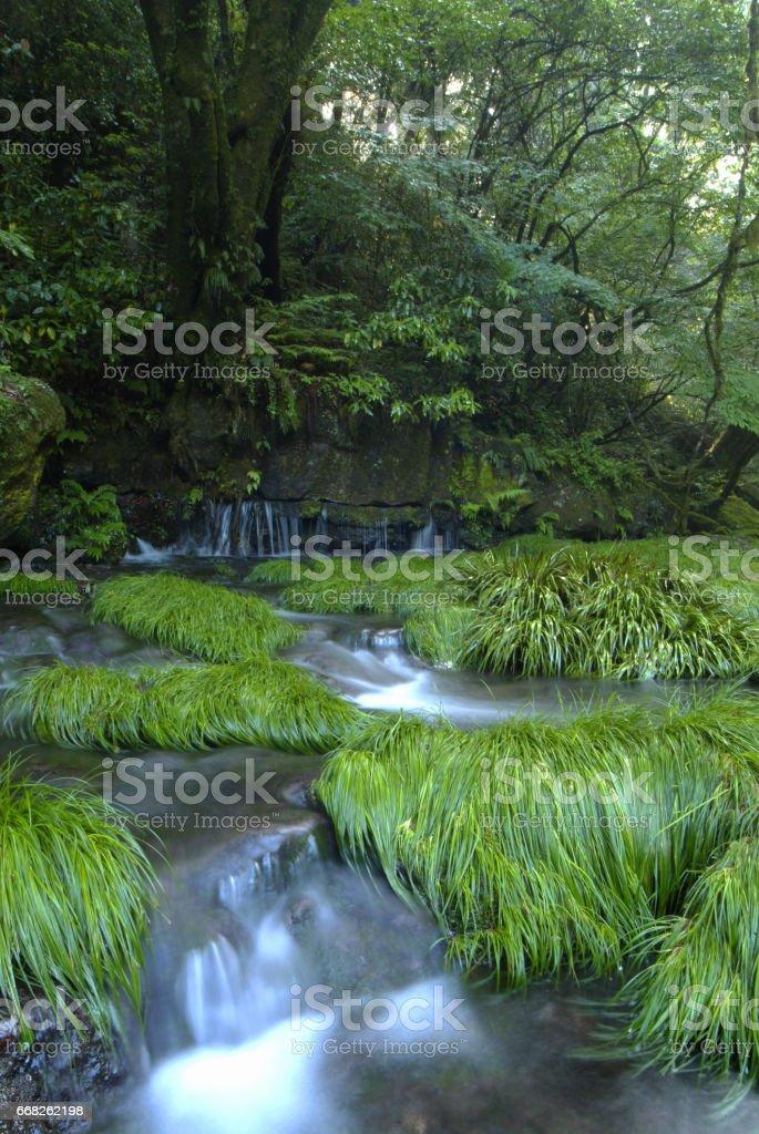 Kikuchi Valley foto stock royalty-free