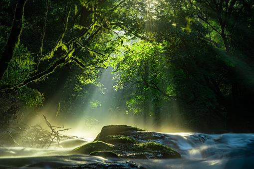 kikuchi valley, waterfall and light lay in the forest, kikuchi, kumamoto, japan
