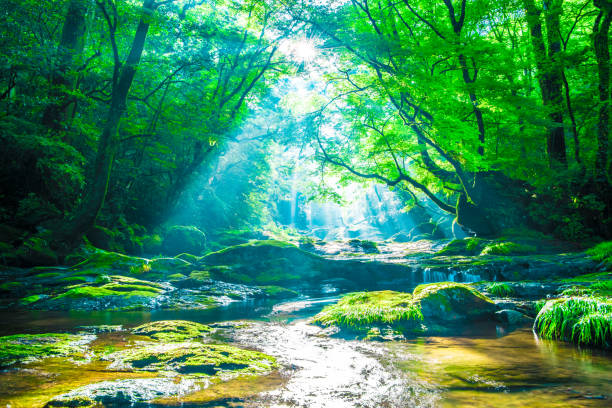 kikuchi valley, waterfall and ray in forest, japan - forest imagens e fotografias de stock