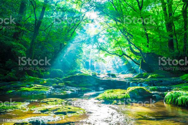 Photo of Kikuchi valley, waterfall and ray in forest, Japan