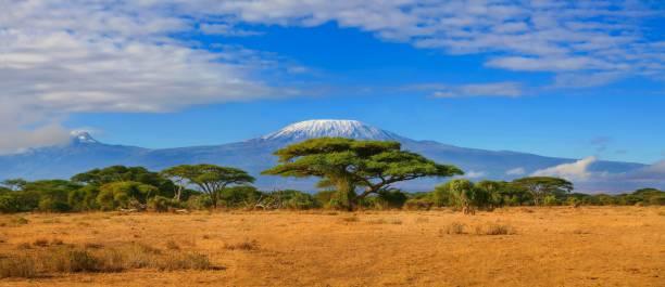 坦尚尼亞乞力馬札羅山旅遊非洲 - 平原 個照片及圖片檔