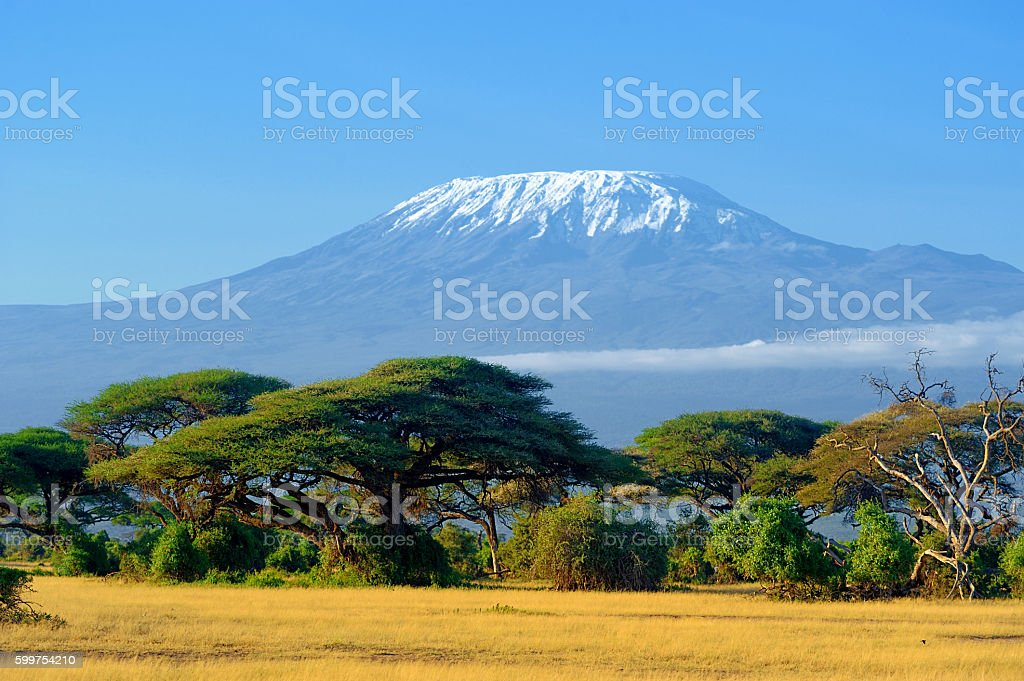 Kilimanjaro on african savannah stock photo