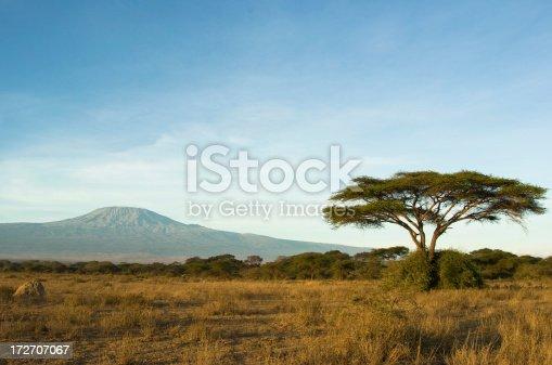 istock Kilimanjaro 172707067