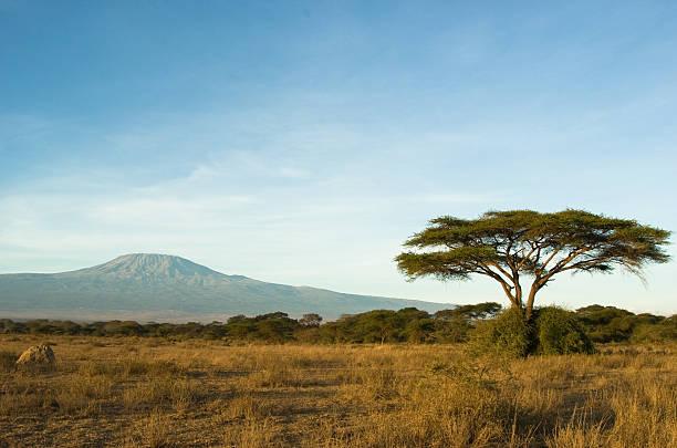 kilimanjaro - 平原 個照片及圖片檔