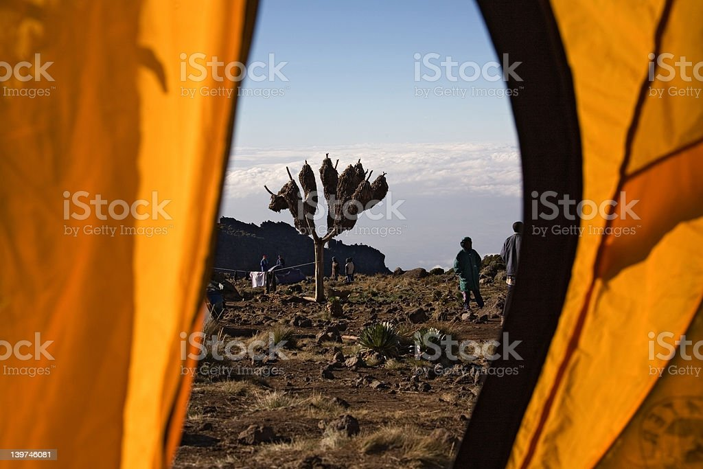 kilimanjaro view from tent stock photo