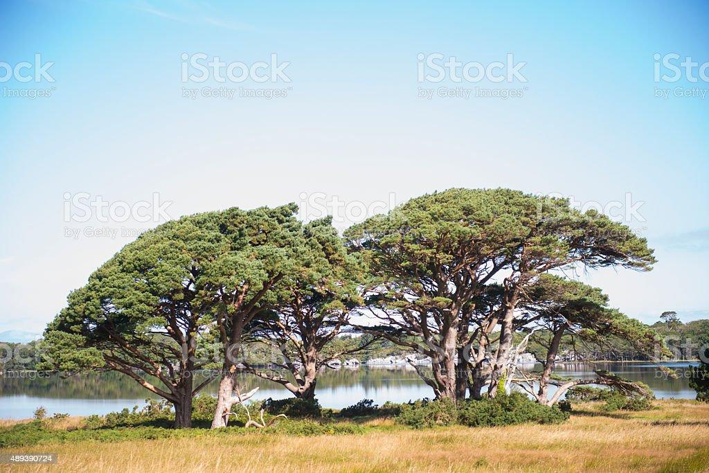 Killarney National Park, Killarney, Ireland. royalty-free stock photo