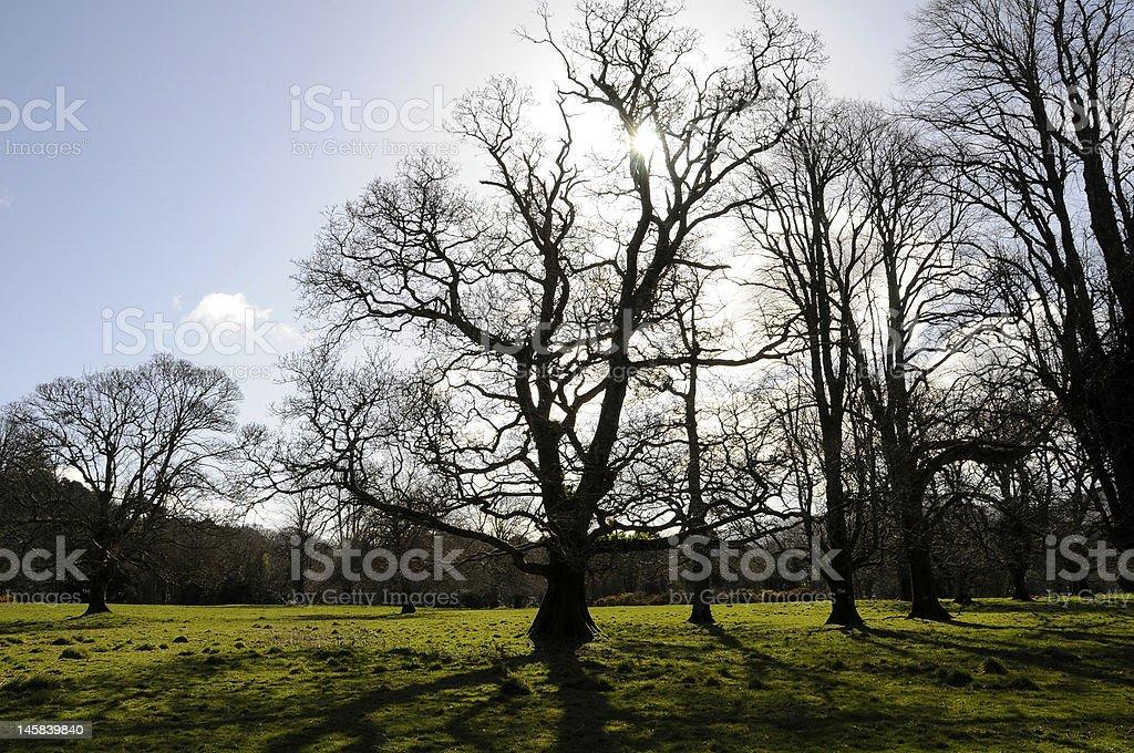 Killarney National Park stock photo