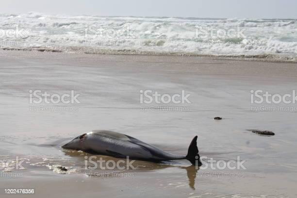 Delfino ucciso - Foto stock royalty-free di Ambientazione esterna