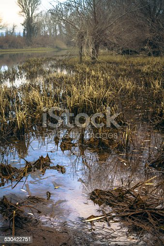 A flooded grassy area with bare trees all along the side in the background.Appears to be a swamp like land. Killing a vanishing world. Symbolism