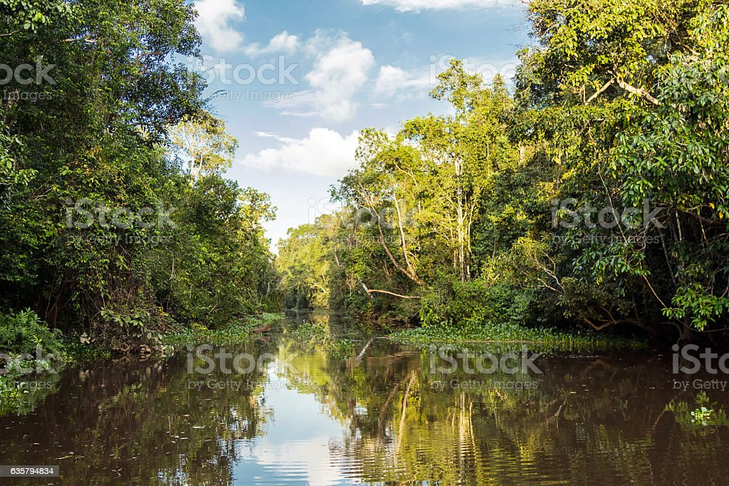 Kinabatangan river, rainforest – Foto
