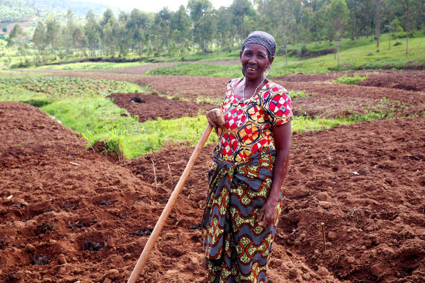 Kinazi, Rwanda - 14 November 2018 : An African subsistence farmer in her fields Kinazi, Rwanda - 14 November 2018 : An African subsistence farmer in her fields garden hoe stock pictures, royalty-free photos & images