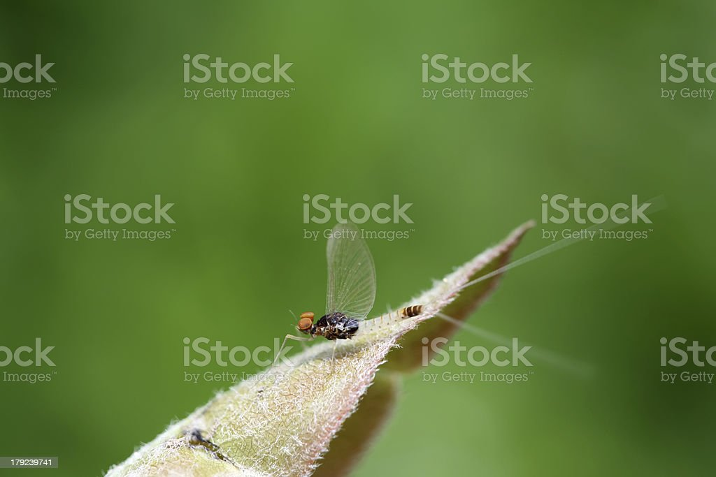 kind of insects on leaves royalty-free stock photo