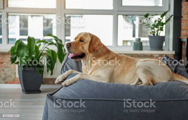 Kindly animal leaning on couch picture id870592200?b=1&k=6&m=870592200&s=612x612&h=qomunsonupcwlk4kpw dvfxcn33ld4i7q34uvsyetwa=
