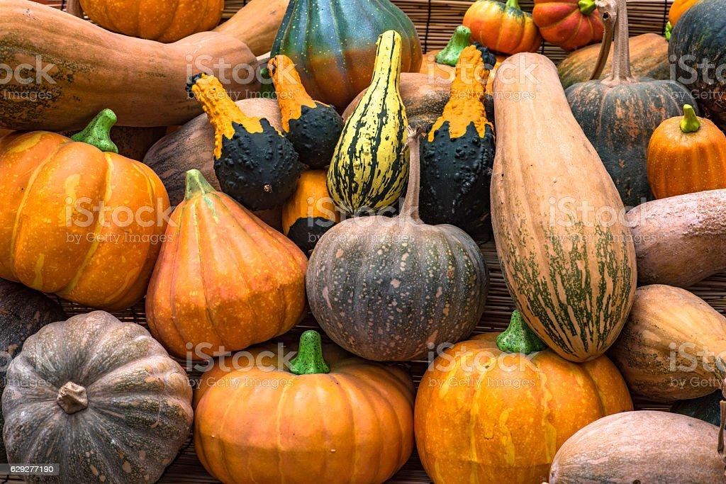 Kinds of pumpkins stock photo