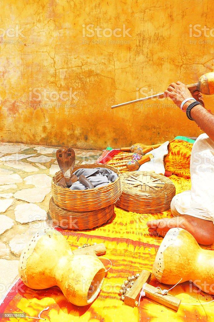 king cobra india stock photo